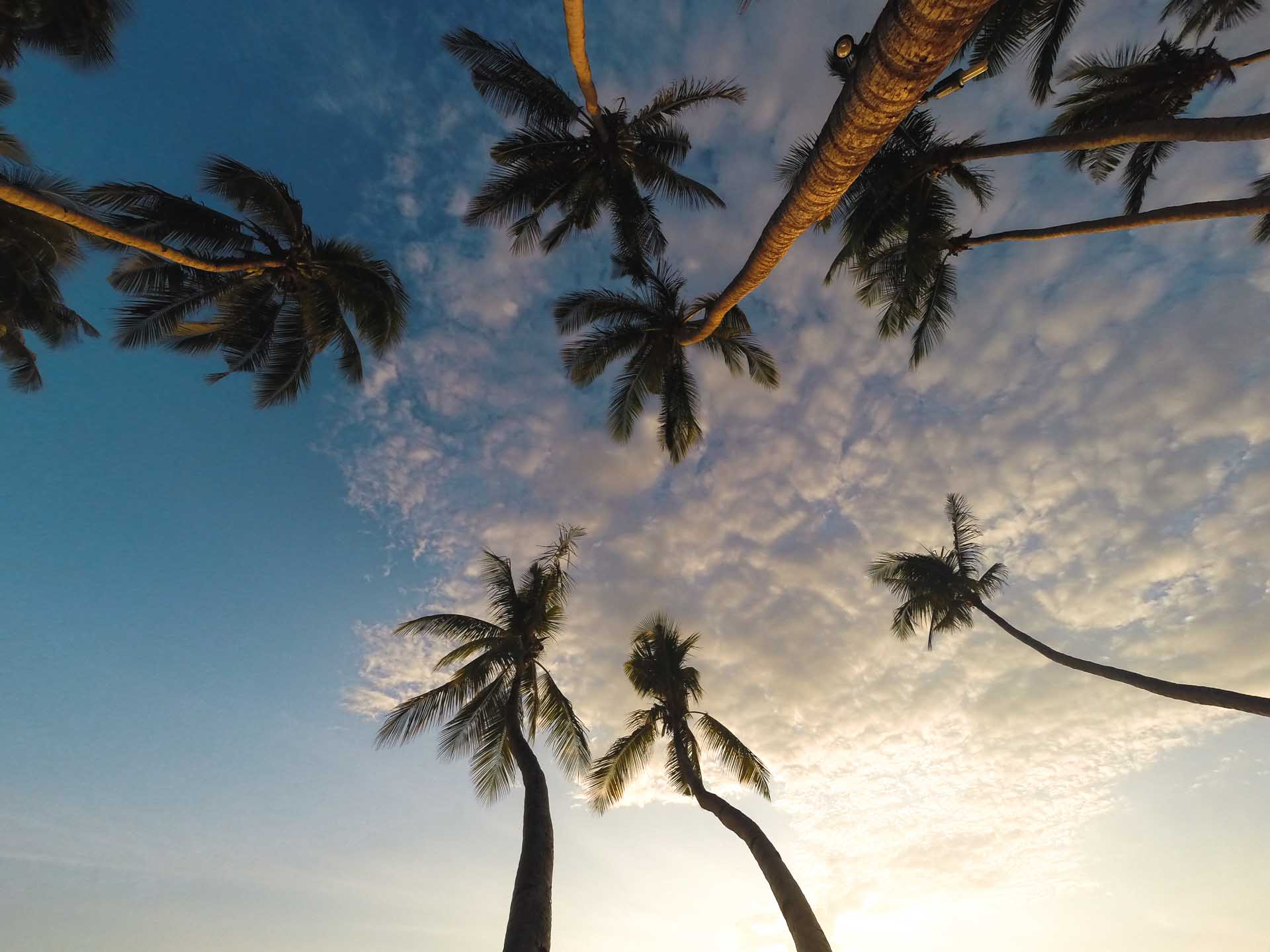 palmtrees in Palawan