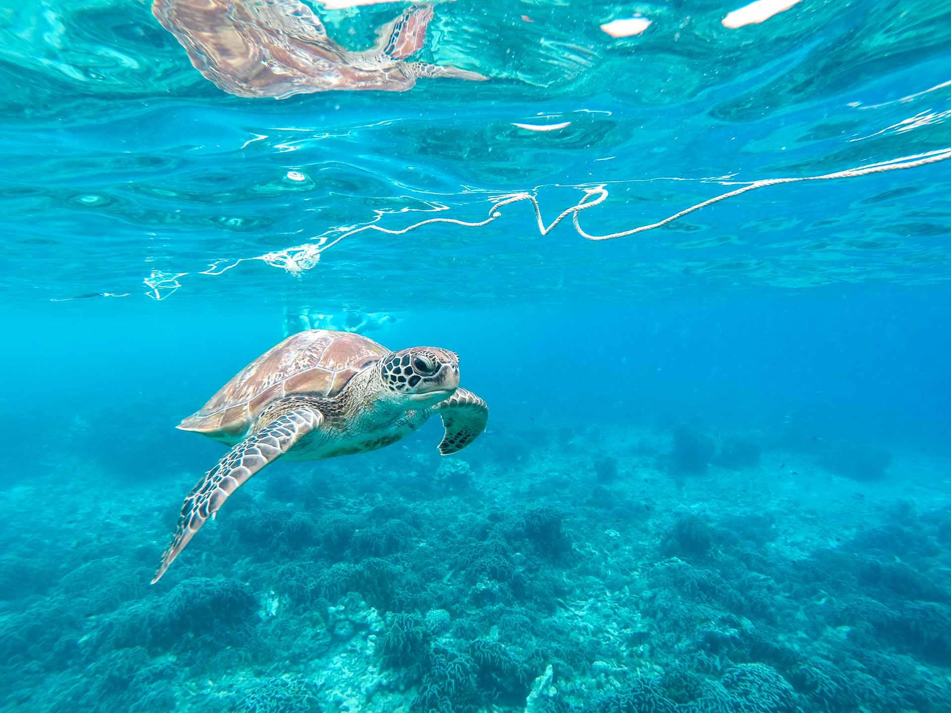Similan Islands - seaturtle