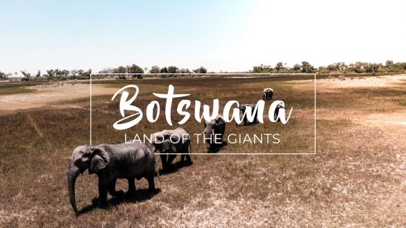 Botswana - Acacia Africa