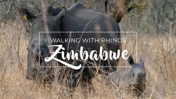 Zimbabwe - Acacia Africa
