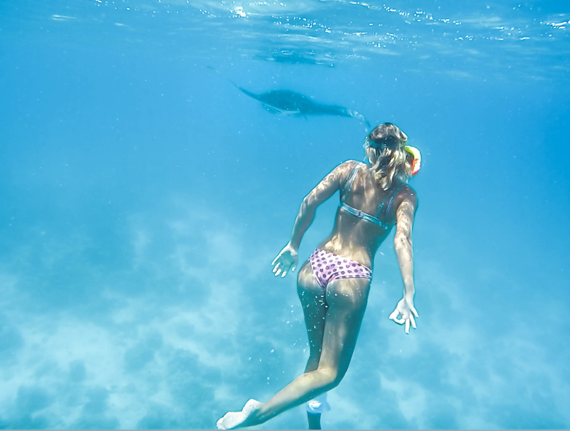 snorkeling with manta rays